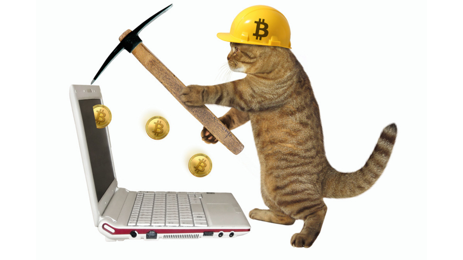 Cat coin crypto currency the binary options book of knowledge