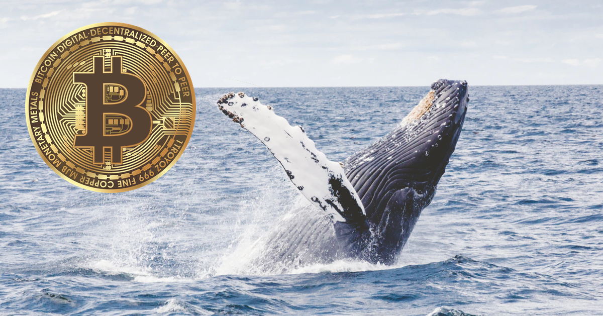 bitcoin whale telegram group