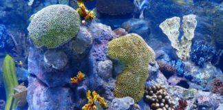 Reef Finance To Partner With Binance