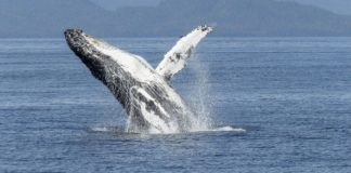 Curve Finance Launches Cross-Asset Swaps for Whales
