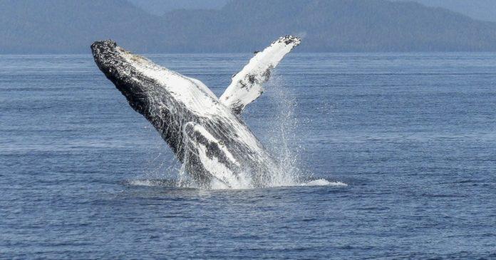Curve Finance lanserar valutaswappar för valar